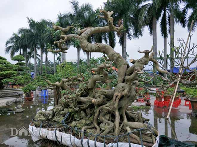 mơ cây cối