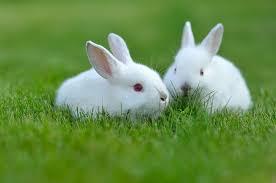 Mơ thấy thỏ đánh con bao nhiêu